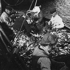 Sildebåd med last i Hornbæk Havn